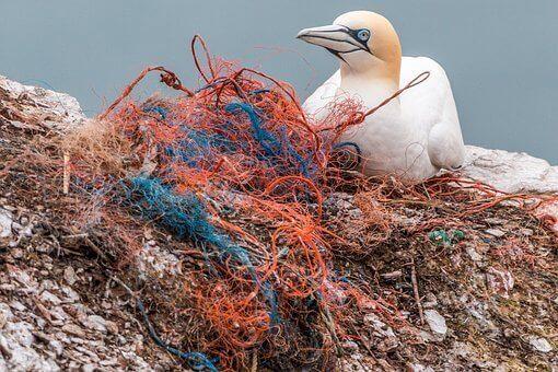 Shoreline ocean pollution