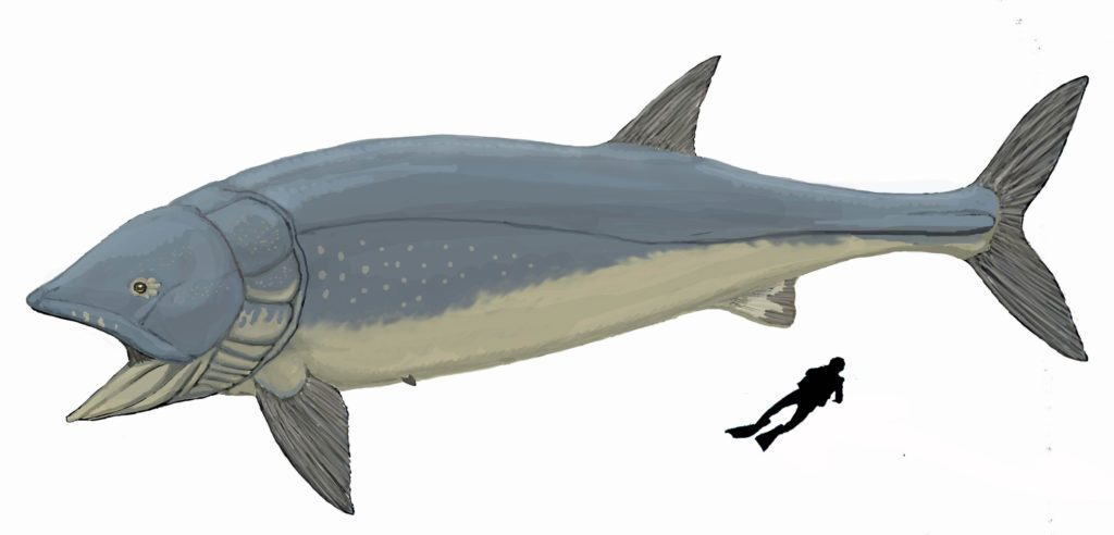 A size comparison of the prehistoric Leedsichthys to a human