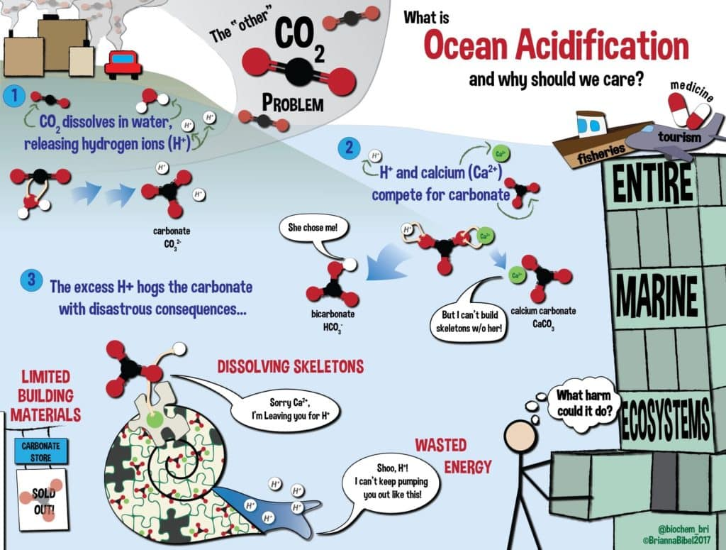 What is Ocean Acidification and why we should care