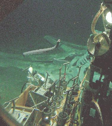 US Navy collecting samples at a whale fall
