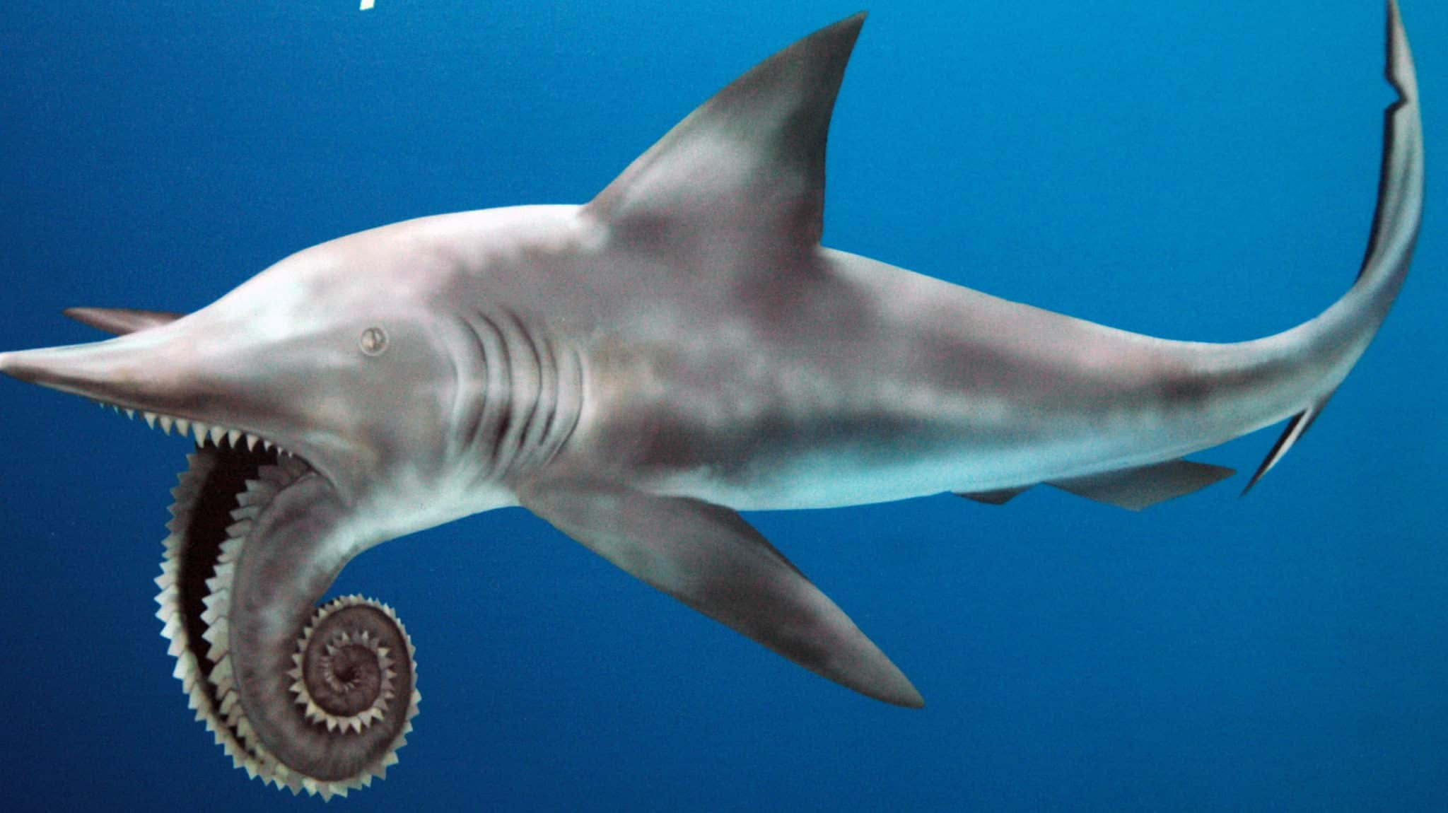 The strange prehistoric Helicoprion