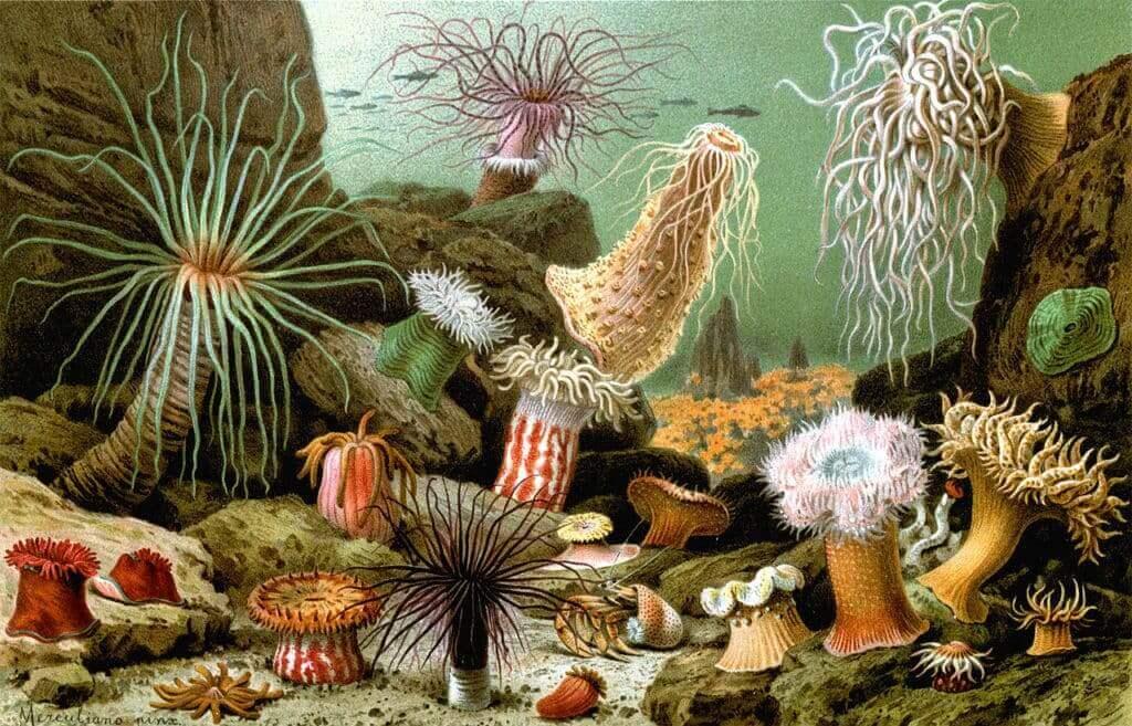 Examples of Sea Anemone