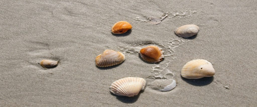 Calcium Carbonate: An Essential Component For Building Of Shells