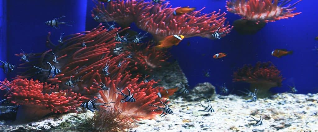 Migration of fishes due to warming of water