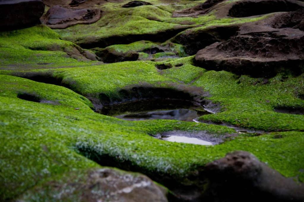 Algae is incredibly small