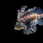 Dangerous sea creatures