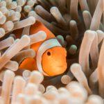 Finding Nemo Species
