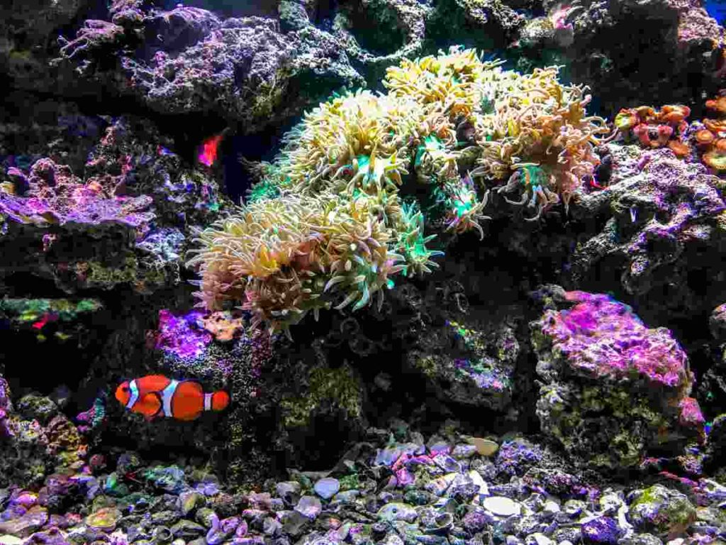 The habitat of a clownfish consisting of coral reefs and anemones