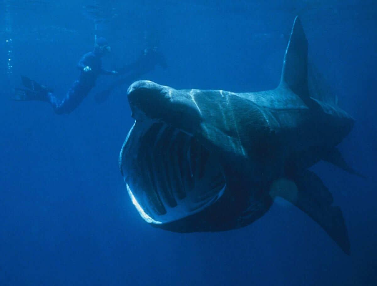 Top 10 Weird and Unusual Sharks